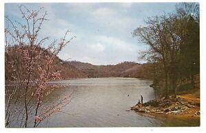 LAKE-CHEROKEE-TN-Spring-Blossoms-Fishing-Vtg-Postcard