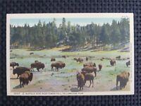BISON WISENT BUFFALO alte Ansichtskarte / old picture postcard c2343