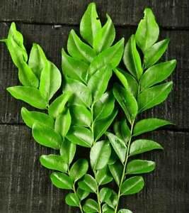 100-biologico-naturale-a-casa-coltivare-Essiccato-al-Sole-Foglie-di-Curry-dallo-Sri-Lanka