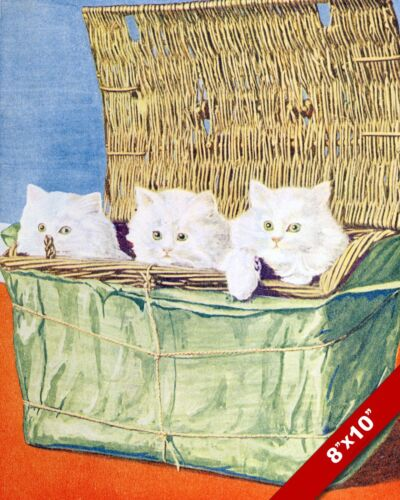 CUTE WHITE KITTENS IN A BASKET CAT PET ANIMAL ART PAINTING REAL CANVAS PRINT