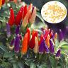 50PCS Garden Ornamental Hot Pepper Seed Organic Chilli Pepper Seeds