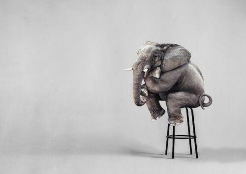 A1 Funny Elephant Sitting Poster Art Print 60 X 90cm 180gsm Animal Gift #16786