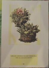 1958 Cactus Lophophora Williamsii Ariocarpus Trigonu N°103 Walter Kupper Vintage