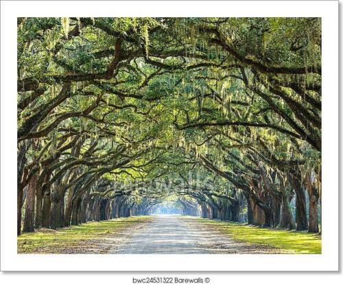 Georgia C Savannah Usa Oak Tree Lined Art Print Home Decor Wall Art Poster