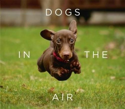 1 of 1 - Dogs in the Air by Jack Bradley...HARDCOVER...LIKE NEW