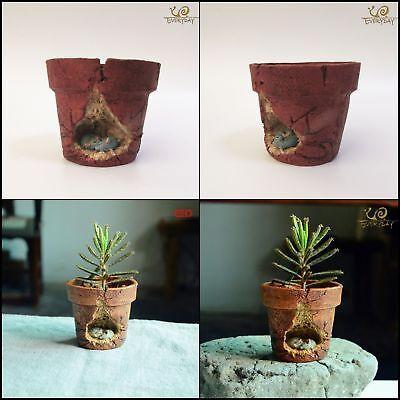 eBay & Mini Red Clay Flower Pots Bonsai Garden Ornaments Tabletop Planter Decoration 761531193264 | eBay