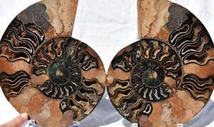 """2243xx Fossile Paire Ammonite Bonne Couleur Cristal Cavités XXXL 9.8 """" 110 Myo GS9FuJ0Q-09154835-533039444"""