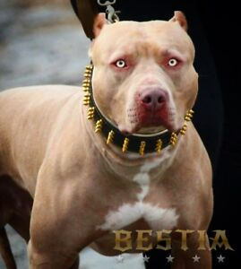 Dog Collar Border