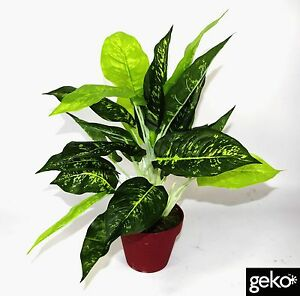 Image Is Loading 40cm Tall Artificial Dieffenbachia Light Potted Plant  Indoor