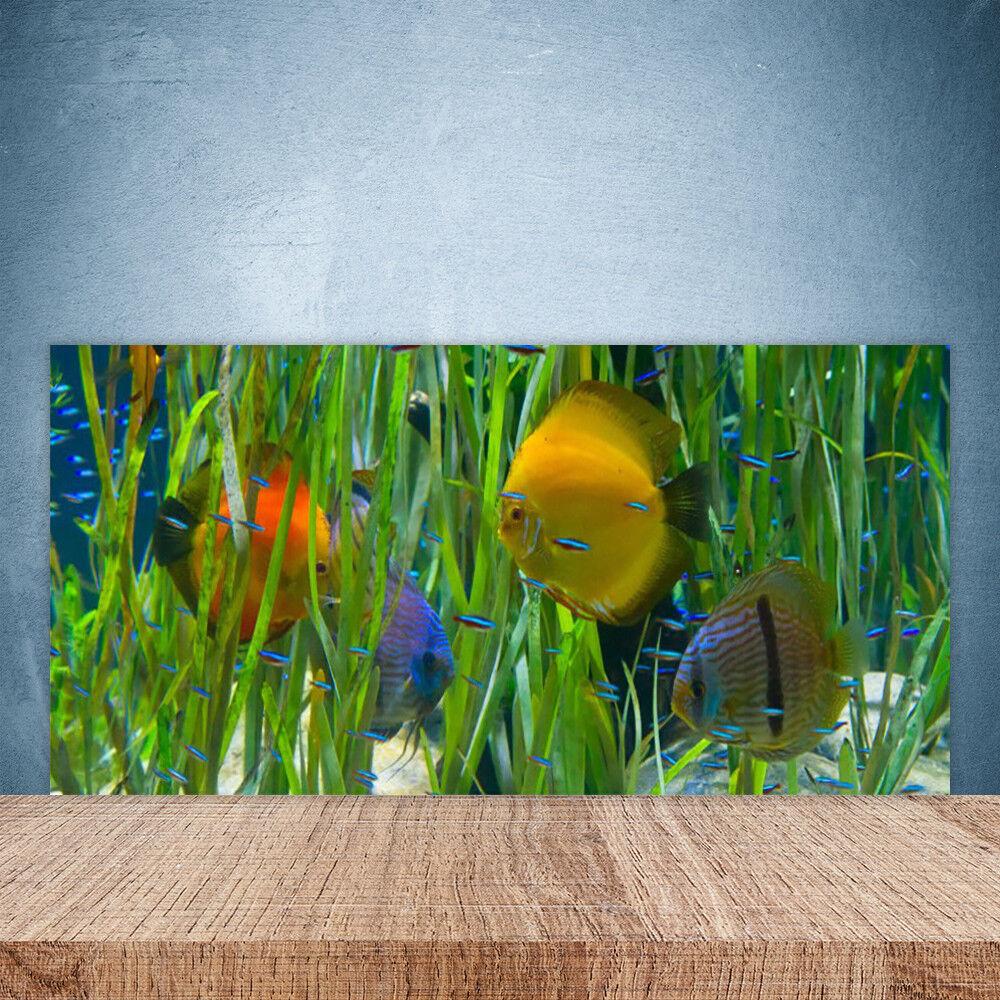 Crédence de cuisine en verre Panneau Paroi 100x50 Nature Poissons