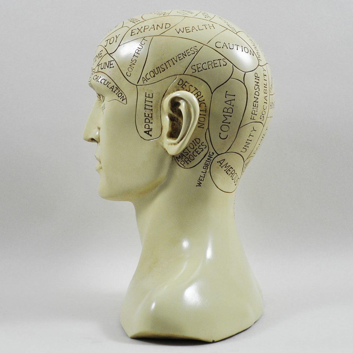 Phrenology Head Bust Traditional Medicine Ornament Craniology Sculpture 20 cm