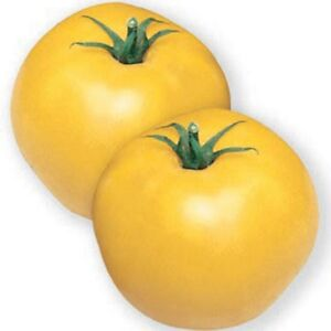 Tomato-Jubilee-Yellow-50-Seeds-BOGO-50-off-SALE