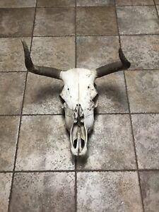 Bull-Skull-With-Horn-Cones