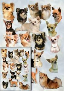 Chihuahua-Dog-Gift-Wrapping-Paper-No-2-By-Starprint-One-sheet-plus-gift-card