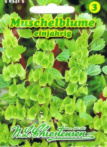 583415 Muschelblume Molucella Trockenblume  Blumen Saatgut  Mischung