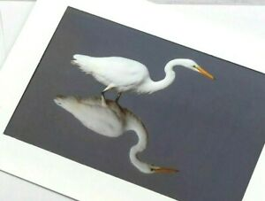 Photo Greeting Card Great Egret Reflection White Siuslaw River w/ Envelope