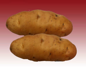Tastes Great Straight from Your Kitchen Garden First Early Variety 8 x Potato Arron Pilot Tubers