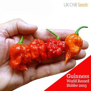Carolina-Reaper-Chilli-Pepper-Semillas-X-10-Super-Hot-100-Original