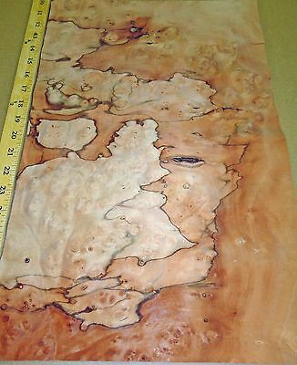 """Pimento Burl wood veneer 4/"""" x 6/"""" raw with no backing 1//32/""""-1//42/"""" thick"""