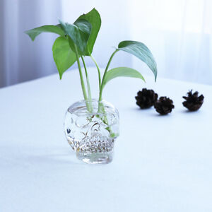 Clear Glass Skull Hydroponic Plants Pot Terrarium Container Tabletop