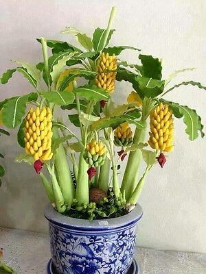 Mini banana bonsai seeds Fruit Seeds Rare Exotic Bonsai banana