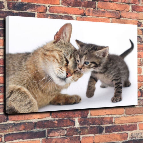 Mother Cat with Kitten Printed Canvas Picture Multiple Sizes 30mm Deep Frame