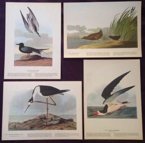 1942 Vintage AUDUBON LOT #1 of 4 BLACK BIRDS INSTANT DECOR Color Art Lithographs