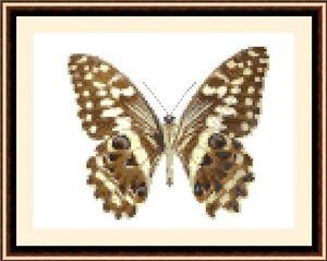 Butterfly-8534-Cross-Stitch-Kit