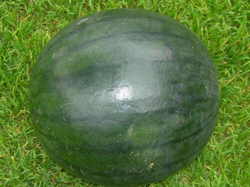 Wassermelone rotfleischig *Sugar Baby* 20 Samen