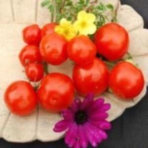 Verdura-pomodoro-Miel DU Mexique - 50 semi-LARGE