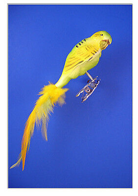 Parakeet Budgie green bird  feather clip glass Christmas Ornament animal 027018