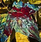 Grow by Chon (CD, Mar-2015, Sumerian Records)