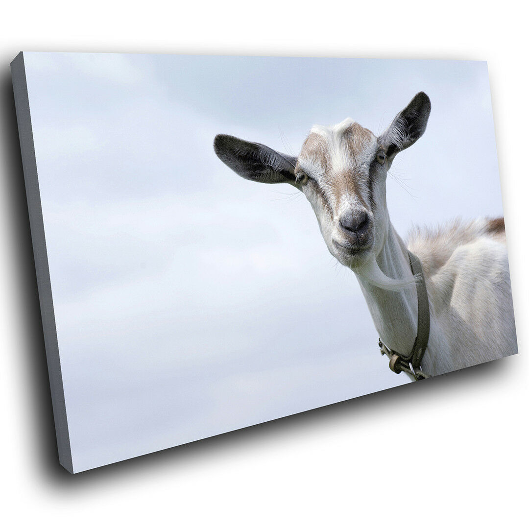 A172 grau Goat Funny Sky Cool Funky Animal Canvas Wall Art Large Picture Prints