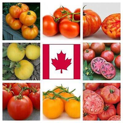 Organic Tomato Seeds 13 Varieties