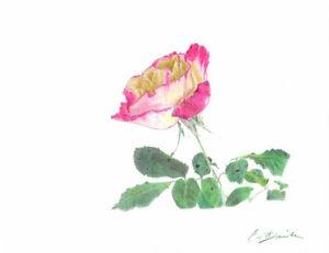 Dibujo A Lápiz Un Color Rosa 85 X 11 Print Rosa Rosa Dibujo Flor