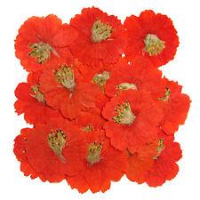 Prensado De Flores, 20 un. Naranja Cosmos arte de elaboración de Tarjetas artesanal materiales