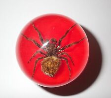 Ghost Spider Specimen 50 mm Sphere Ball Vechicle Shift Knob on Red Bottom