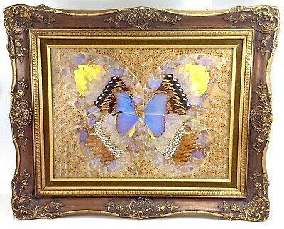 Wings Closed One real Cymothoe reinholdi butterfly Unmounted art and collectibles insect taxidermy mixed media, Papered