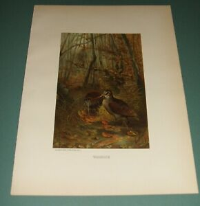 1885-Original-Chromolithograph-Woodcock-Louis-Prang-amp-Co