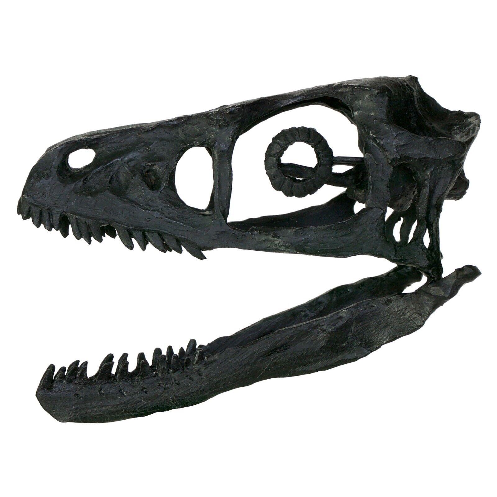 Stunning Raptor dinosaur skull - Bambiraptor fossil replica