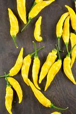 25+ Rare Heirloom Aji Pineapple Hot Pepper Seeds With A Bonus