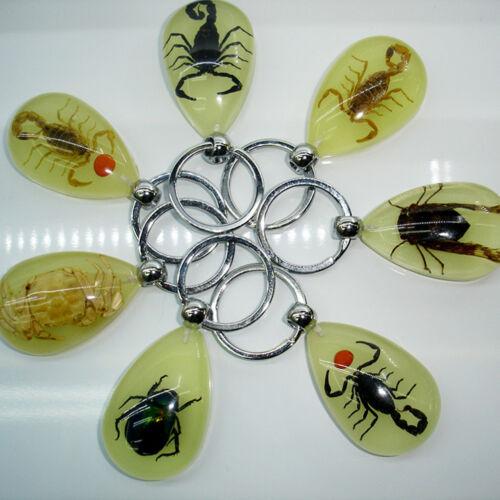 Scorpion Glow Lucite Keyring Keychain Insektenschmuck Präparatoren GeschenkTPI