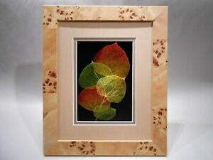 Leaf Lines 11x14 Etched Real Aspen Leaves in Maple Burl Shadowbox Frame