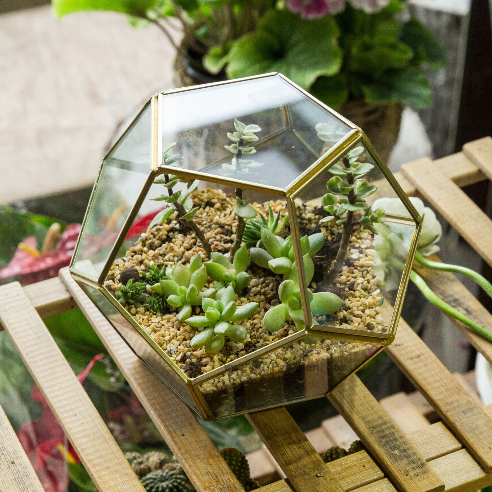 Ball Shape Brass And Glass Geometric Terrarium Plant Planter Succulent Flowerpot For Sale Online