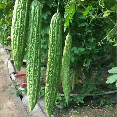 2019 Balsam Pear Seed Bitter Melon Organic Vegetable 10pcs Seeds Brand New