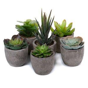 Artificial-Succulent-Plants-Series-Plastic-Decorative-Grass-Collection-1-of-T4U
