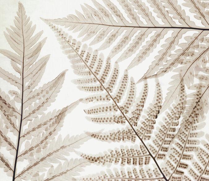 3D Simple leaves 1 WallPaper Murals Wall Print Decal Wall Deco AJ WALLPAPER