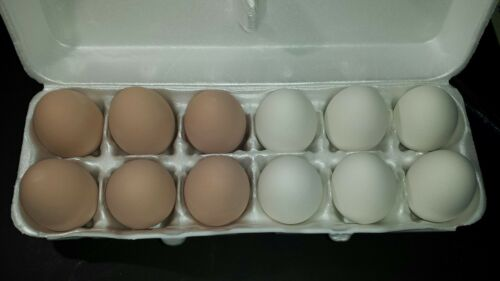 12 MIXED CERAMIC NEST TRAINING EGGS FOR CHICKEN HATCHING