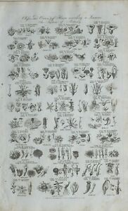 1789-DATED-PRINT-CLASSES-ORDERS-OF-FLOWERS-BOTANY-POLYANDRIA-SILICULOSA-CROWFOOT