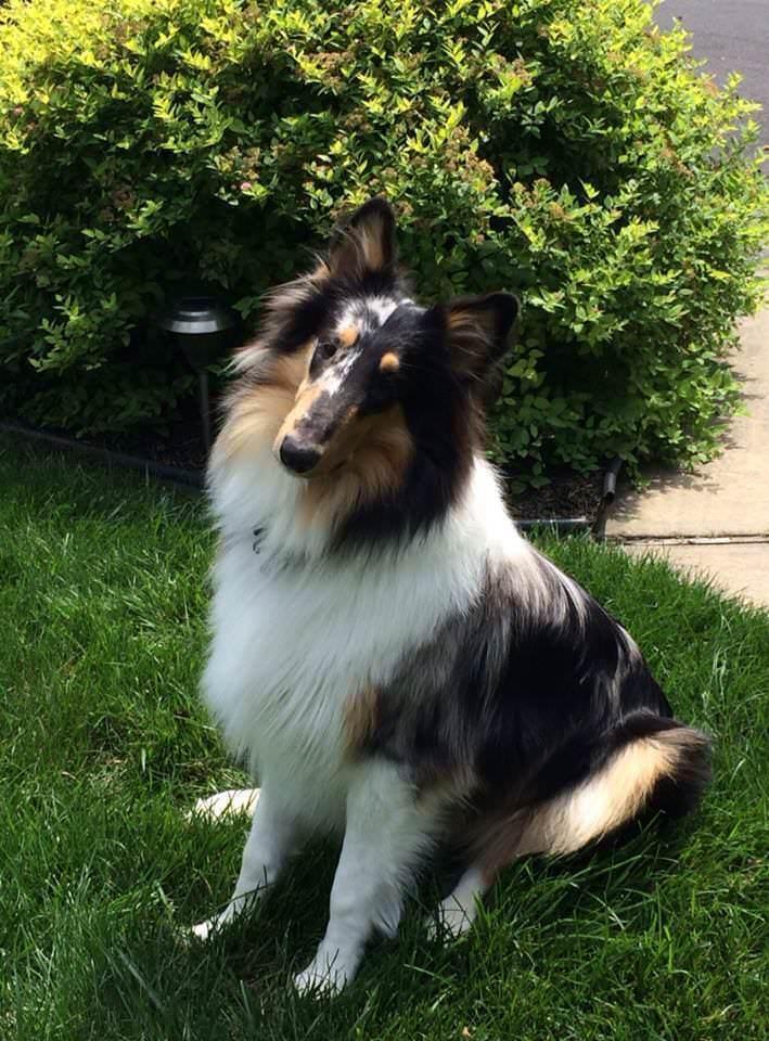 70 Count RedBarn BULLY RINGS Dog Chews & Treats Treats Treats Sticks Grass Fed Cattle NATURAL 901862